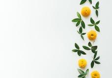 Желтые цветки и листья с космосом экземпляра Стоковые Изображения RF