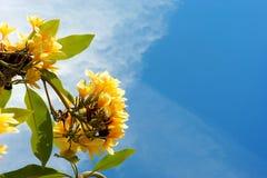 Желтые цветки и небо стоковая фотография rf