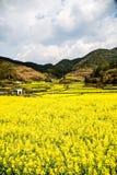 желтые цветки и солнечное небо Стоковая Фотография RF