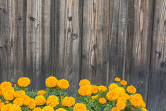 Желтые цветки на деревянной предпосылке Стоковая Фотография RF
