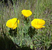 Желтые цветки на острове Анджела Стоковые Изображения