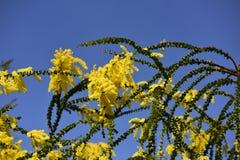 Желтые цветки, небо Стоковое Изображение
