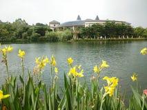 Желтые цветки около озера Стоковые Изображения