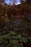 Желтые цветки осени травы стоковая фотография