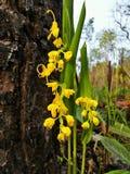 Желтые цветки, свежие Стоковые Изображения
