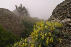 Желтые цветки среди утесов Стоковое фото RF