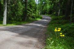 Желтые цветки стороны дороги Стоковое Изображение RF