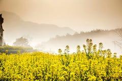 желтые цветки Стоковое фото RF