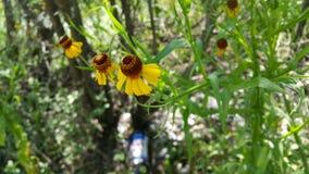 Желтые цветки Стоковые Изображения
