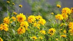 Желтые цветки видеоматериал