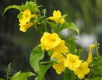 Желтые цветки Стоковое Изображение