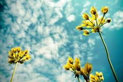 Желтые цветки Стоковые Фотографии RF