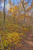 Желтые цветы в лесе в падении стоковые фотографии rf