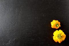 Желтые шотландские перцы chili bonnet на плите шифера Стоковое Изображение RF