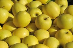 Желтые яблоки Стоковое Изображение