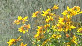 Желтые coneflowers и понижаясь падения воды Стоковое Изображение RF