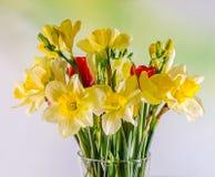 Желтые daffodils и цветки freesias, красные тюльпаны в прозрачной вазе, конец вверх, белая изолированная предпосылка, Стоковые Фото