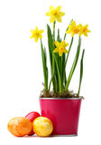 Желтые daffodils Стоковые Изображения RF