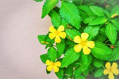 Желтые flwers дома Стоковое Изображение