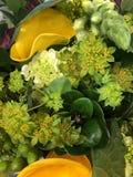 Желтые kalalilies Стоковые Изображения