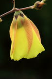 Желтые wildflowers. Стоковая Фотография RF