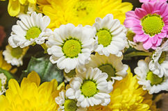 Желтый, белый и mauve букет хризантем цветет стоковые изображения