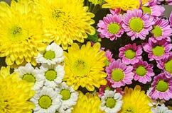 Желтый, белый и mauve букет хризантем цветет стоковое изображение