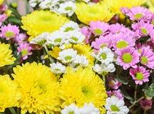 Желтый, белый и mauve букет хризантем цветет стоковые изображения rf