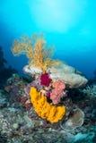 Желтый вентилятор губки и моря Стоковое Фото