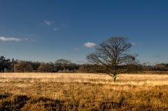 Желтый вереск стоковые фотографии rf