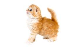 Желтый взгляд со стороны котенка на белой предпосылке стоковое фото rf