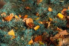 Желтый высушите листья на ветвях дерева Стоковое Изображение RF