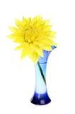 Желтый георгин Стоковые Изображения