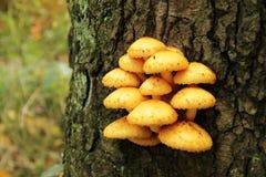 Желтый гриб на дереве Стоковое фото RF