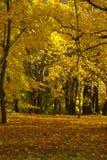 Желтый день осени на парке Стоковая Фотография RF