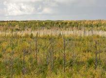 Желтый лес осени стоковая фотография