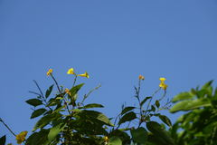 Желтый завод цветков Стоковая Фотография RF
