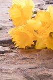 daffodils засаживают на деревянной предпосылке Стоковые Фотографии RF