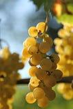 Желтый завтрак-обед виноградины Стоковые Изображения RF