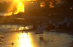 Желтый заход солнца пара и птицы пляжа Стоковые Фото