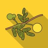 Желтый значок цветка мимозы в плоском стиле изолированный на белой предпосылке Иллюстрация вектора запаса символа Австралии Стоковые Фотографии RF
