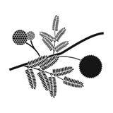 Желтый значок цветка мимозы в черном стиле изолированный на белой предпосылке Иллюстрация вектора запаса символа Австралии Стоковая Фотография