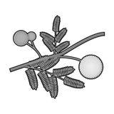 Желтый значок цветка мимозы в monochrome стиле изолированный на белой предпосылке Иллюстрация вектора запаса символа Австралии Стоковая Фотография
