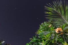 Желтый и белый plumeria цветет на дереве в саде тропического острова Бали, Индонезии Съемка ночи Стоковое Изображение RF