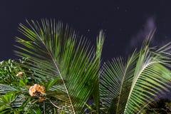 Желтый и белый plumeria цветет на дереве в саде тропического острова Бали, Индонезии Съемка ночи Стоковые Фото