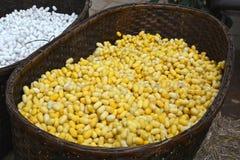 Желтый и белый silk кокон Стоковое Фото