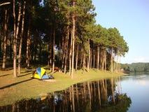 Желтый и голубой шатер в forrest Стоковое Фото