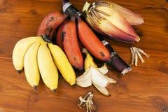 Желтый и красный банан с цветком банана и ручкой сахара камышовой Стоковое Изображение RF