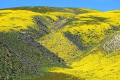 Желтый каньон Стоковая Фотография RF