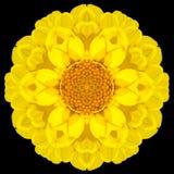 Желтый калейдоскоп мандалы цветка изолированный на черноте Стоковое Изображение